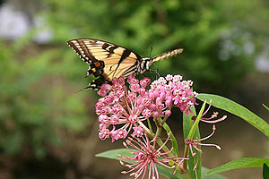 Native plants attract local wildlife Photo by MAEOE