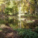 Wetland created in the Sligo Creek watershed as part of a restoration effort