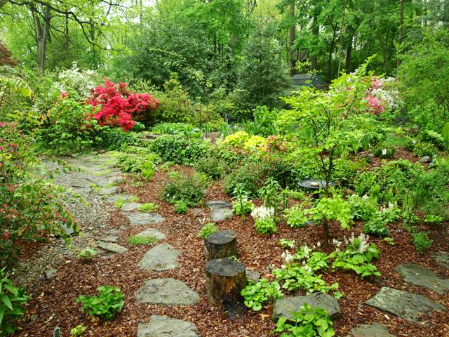 Image of a backyard garden.