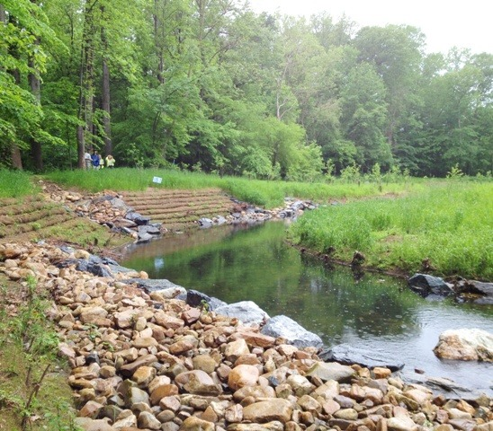 Image of a restored stream bank.