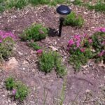 Image of a groundlevel plant, named phlox, blooming pink flowers. The phlox was planted within a County rain garden.