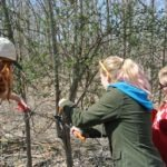 Image of three high school volunteers removing invasive species.