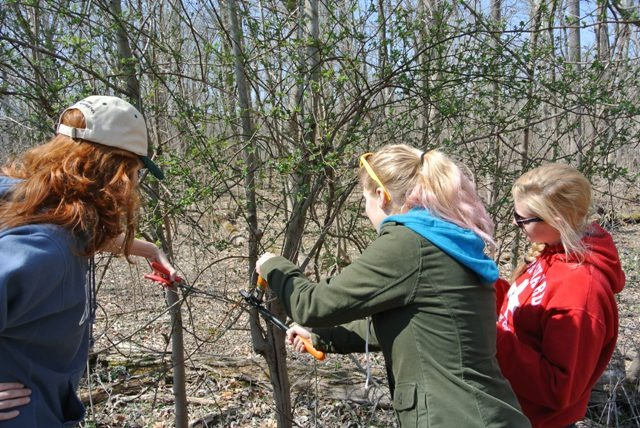 Image of three high school volunteers removing invasive species.