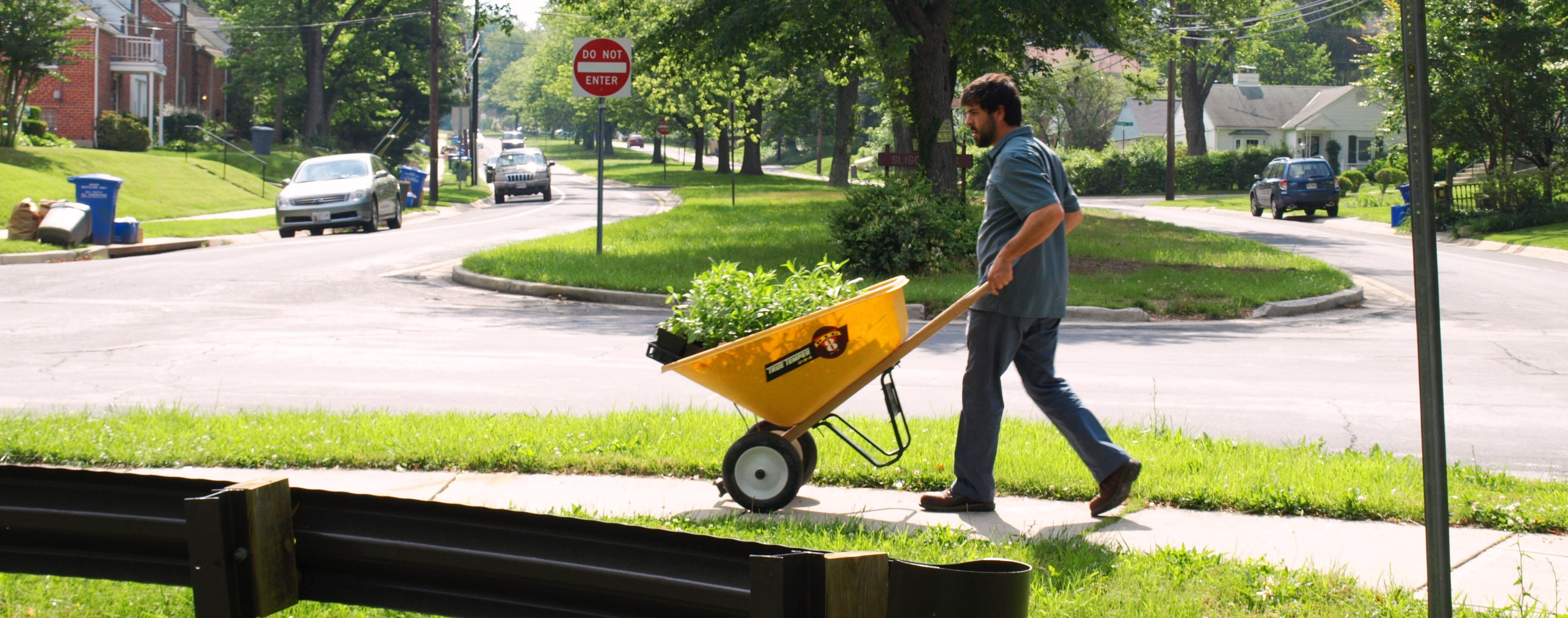 Image of a volunteer moving plants with a wheel barrow.