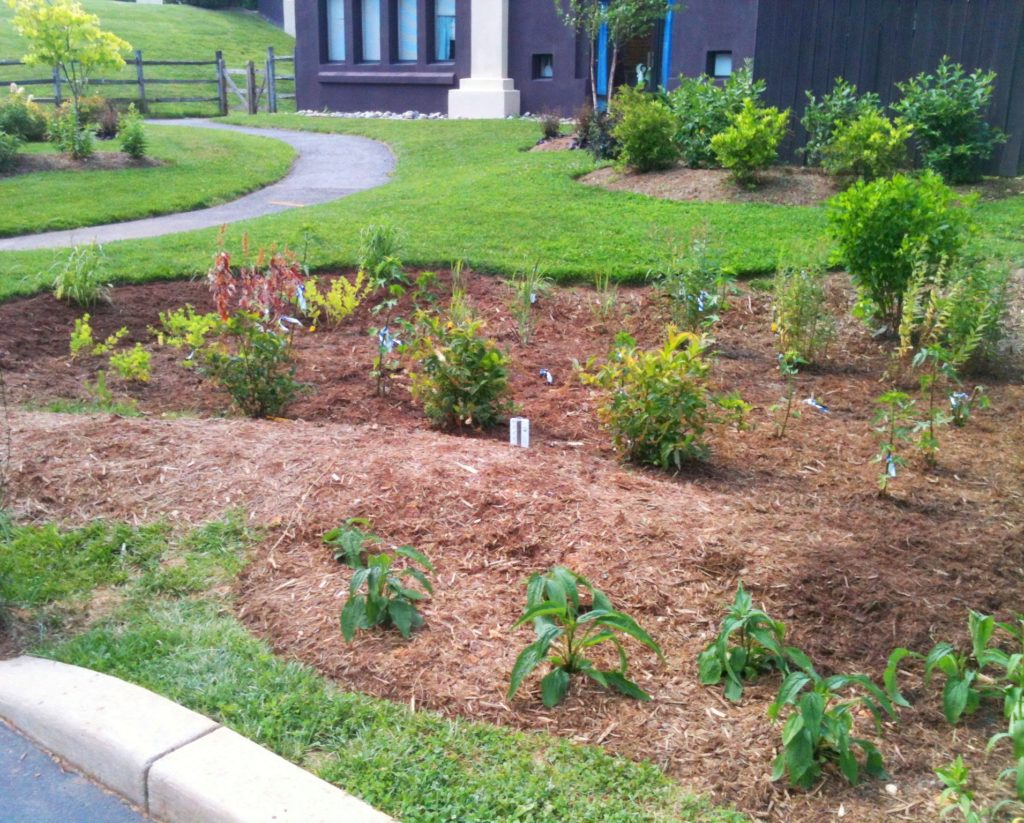 Image of St. James Episcopal Church rain garden after planting.