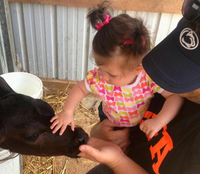 Image of a child petting a cow.