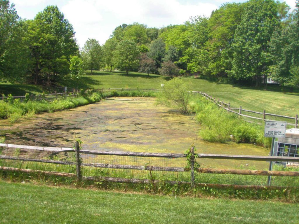 Image of a stormwater pond with a severe algal bloom.