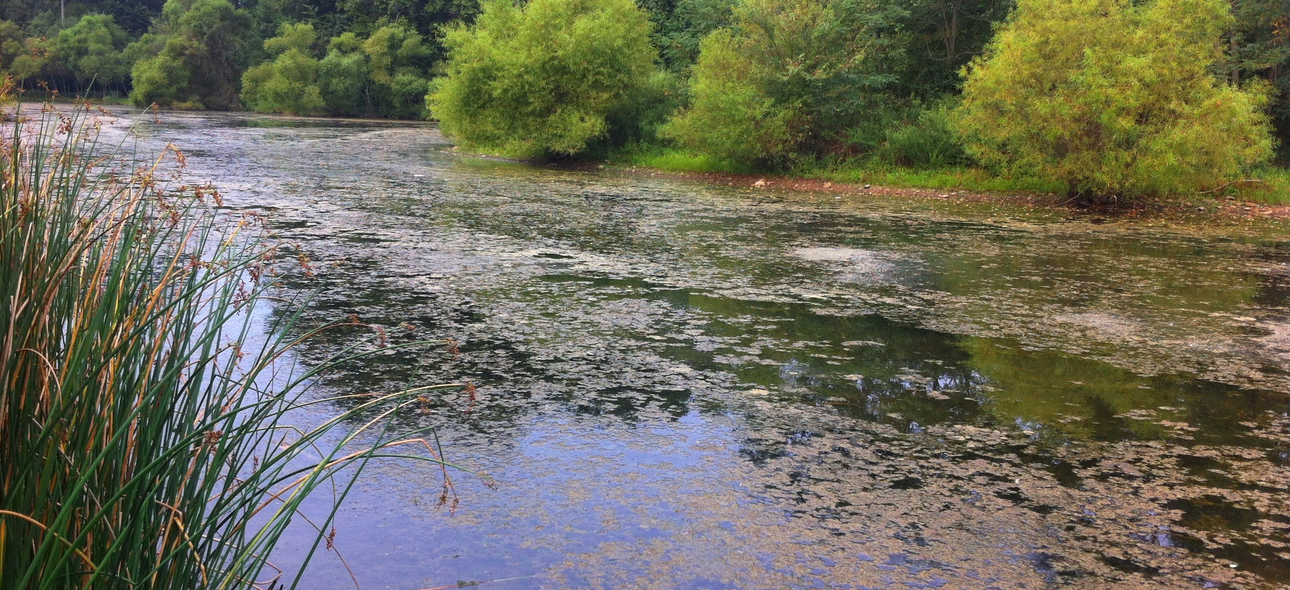 Image of algae in a Montgomery County lake.