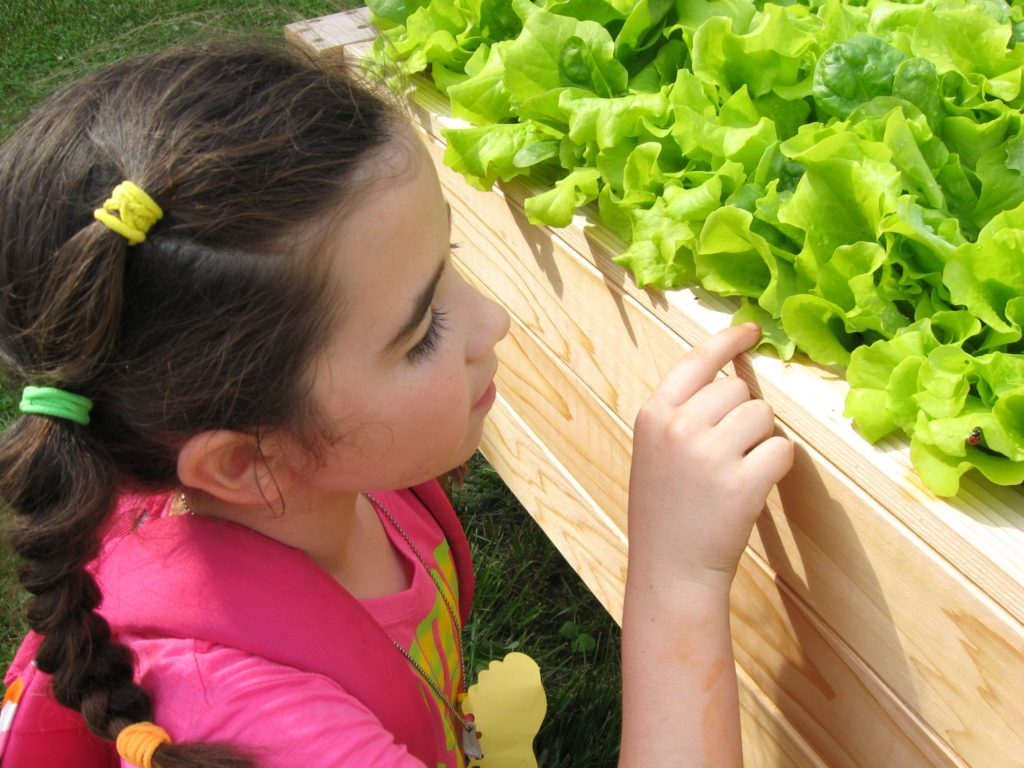 Photo of a little girl enjoying her vegetable garden.