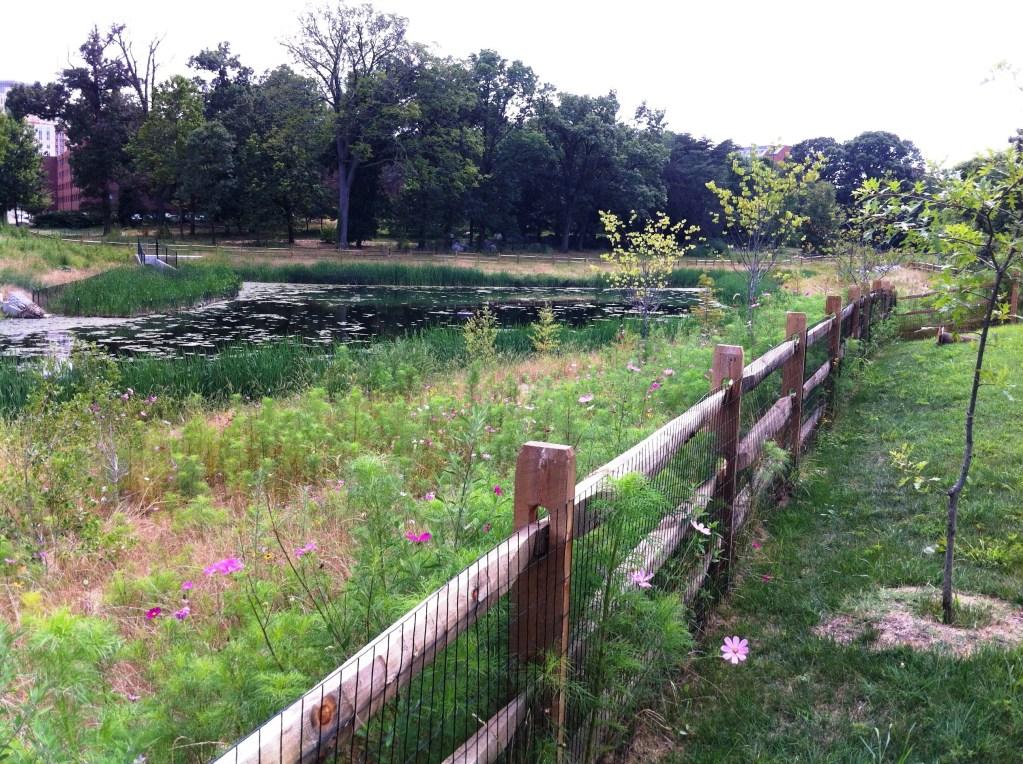 Image of Stony Creek at NIH