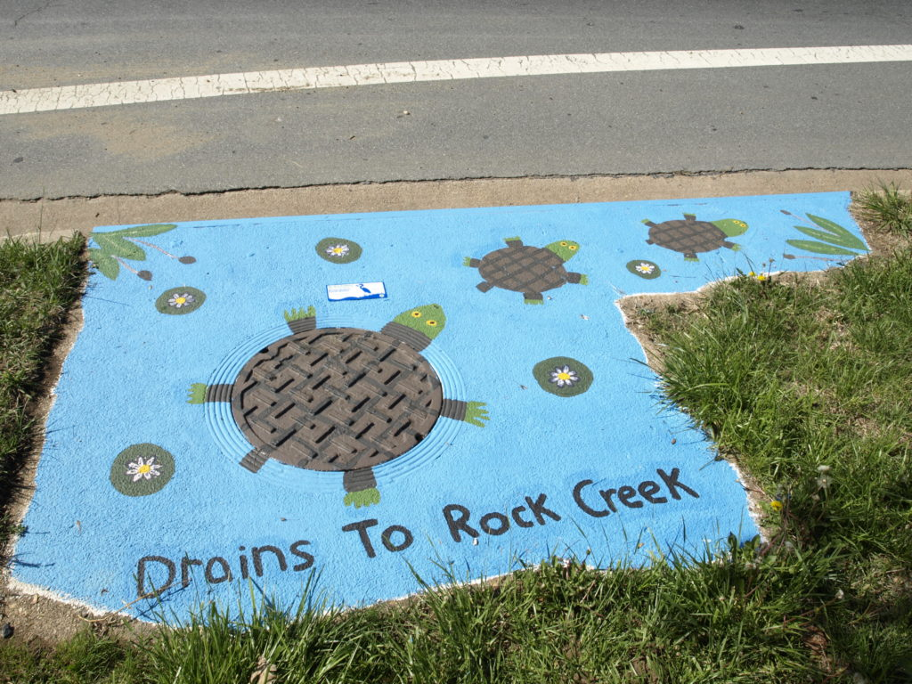 Image of turtle storm drain art