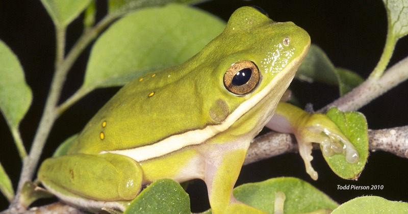 Sign up for the 2018 FrogWatch workshop