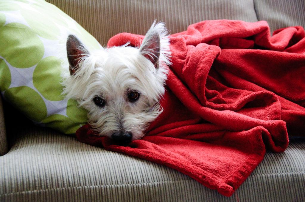 Dog Under Covers, courtesy of Brett Neilson, Flickr