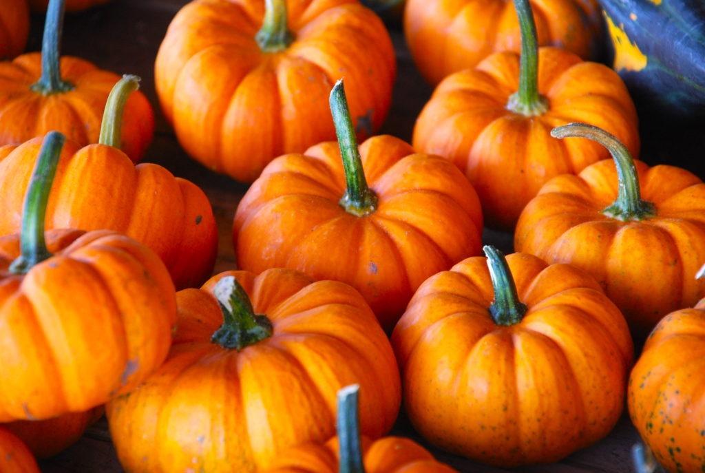 Pumpkins, courtesy of Adam Fagen, Flickr