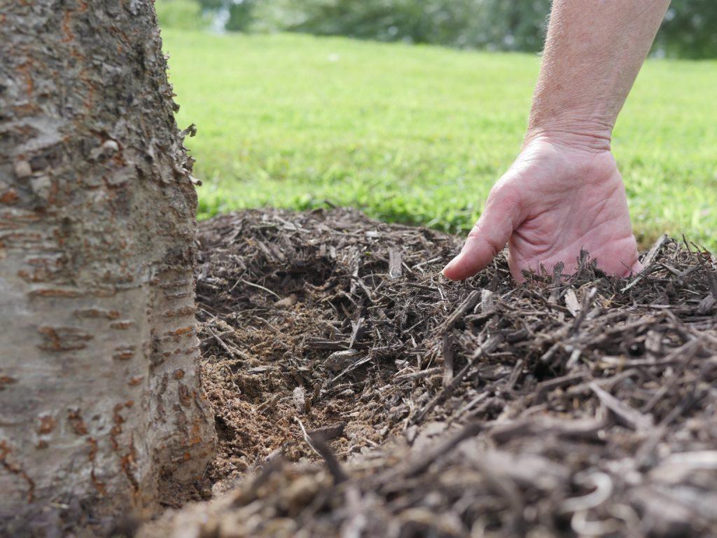 Check the mulch depth