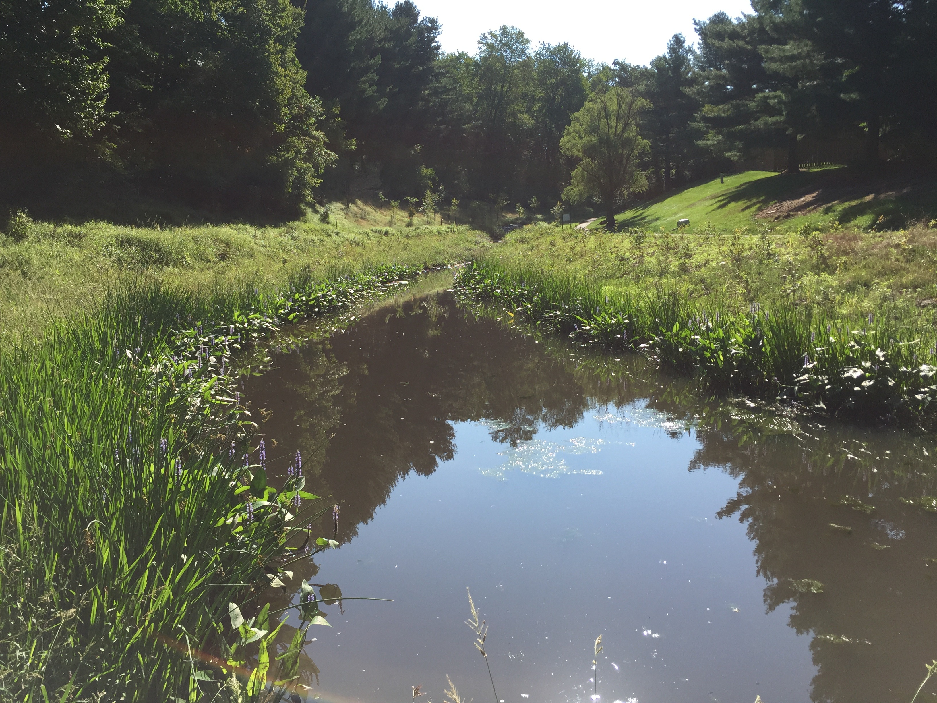 Ponds department of environmental protection montgomery county md - Image Of Fallsberry Pond 11 Months After Conversion To A Wet Pond