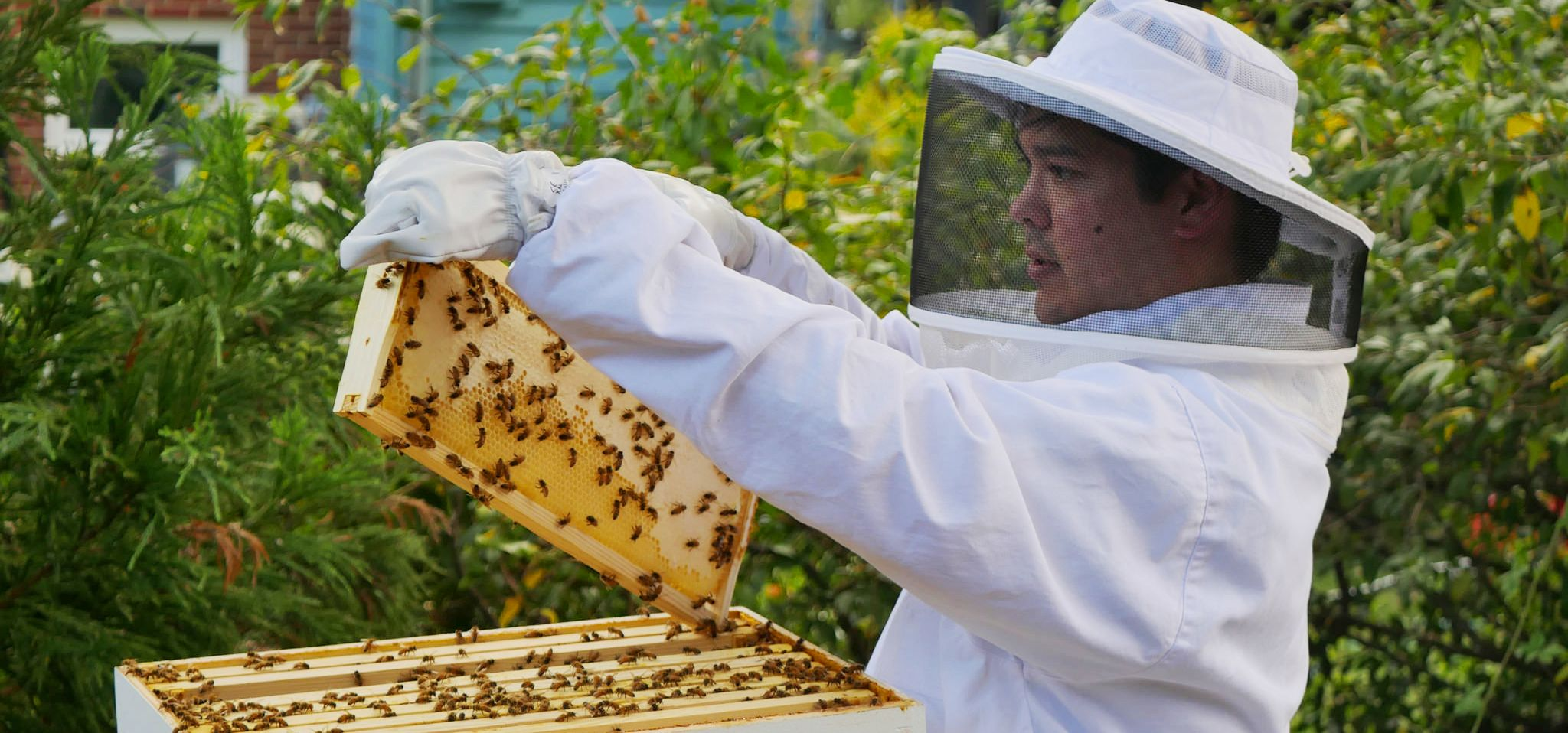 Backyard Beekeeping: Easier (and Safer) Than You Think