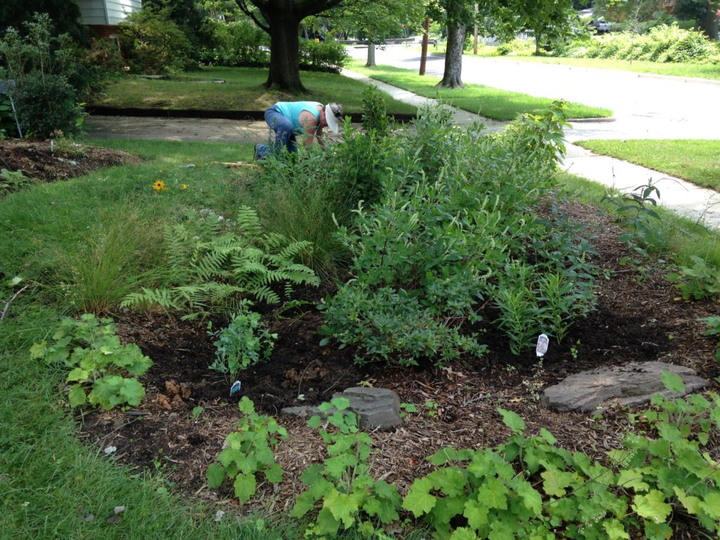 Woman weeding a rain garden