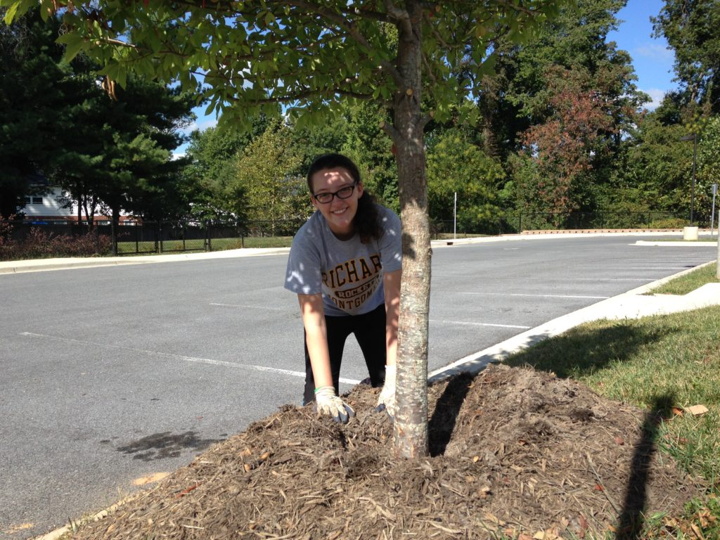 Student clearing mulch away from the base of a tree