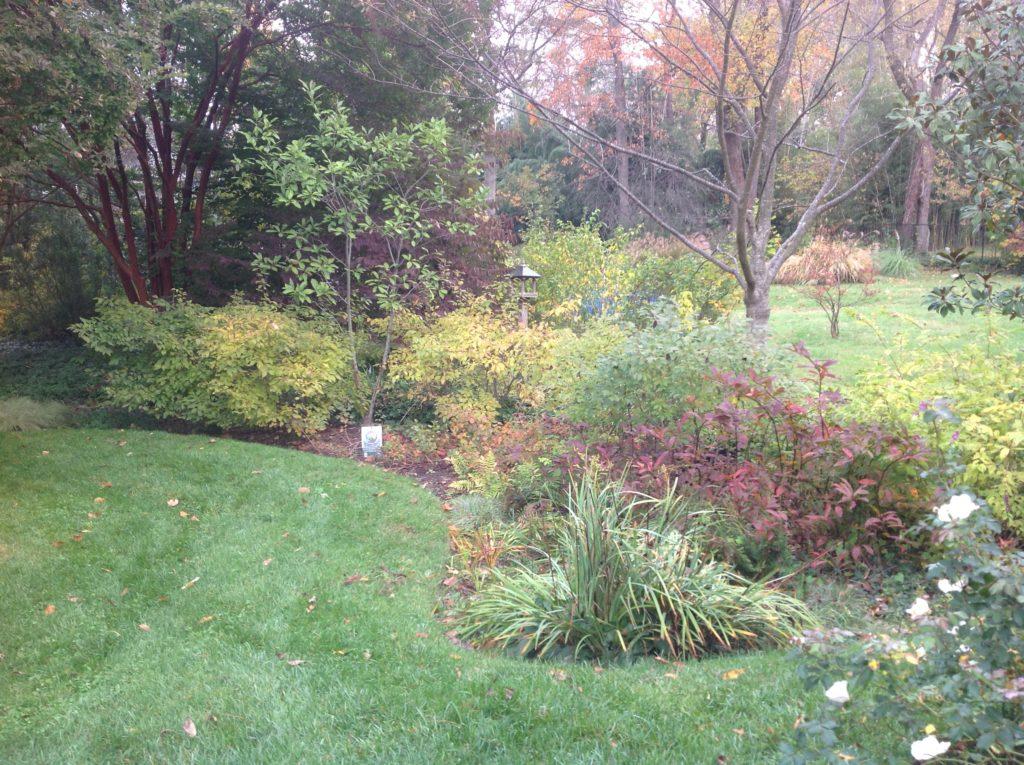 Rain garden in the fall