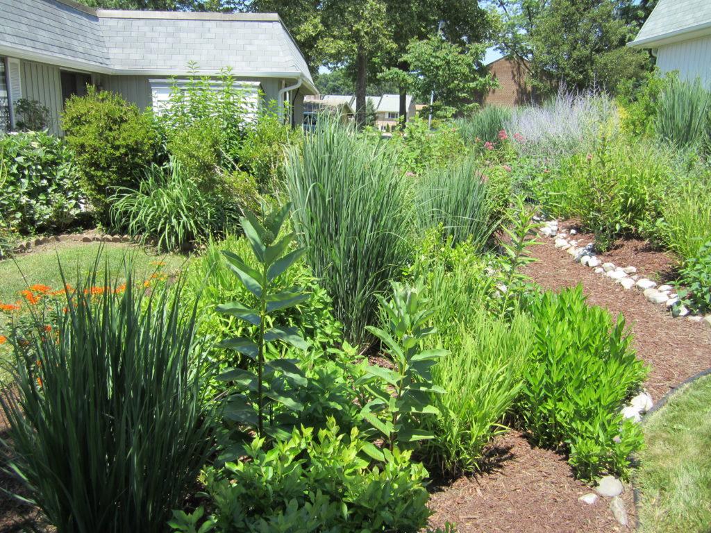 rain garden in summer