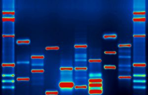 DNA. Photo by micahb37/flickr