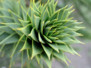 Spiral plant pattern. Photo by Hannipic (PhotoArt Laatzen)/Flickr