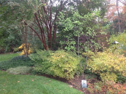 """""""Fall"""" in love with these native plants and beautify your autumn landscape!"""