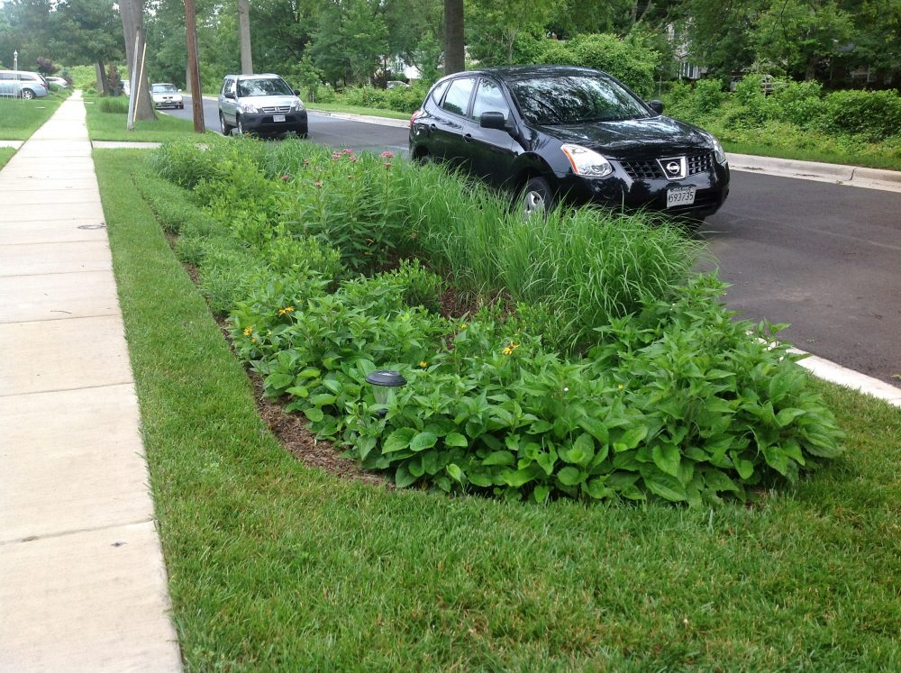 A Green Street bioretention retrofit in Silver Spring.