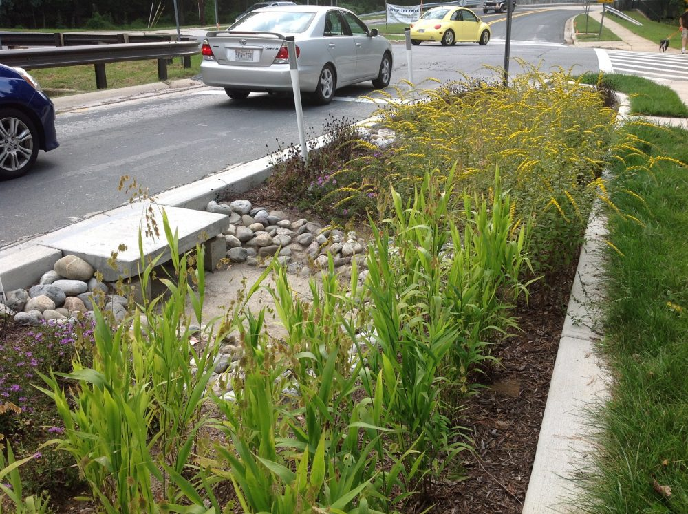 Native plants fill a green street
