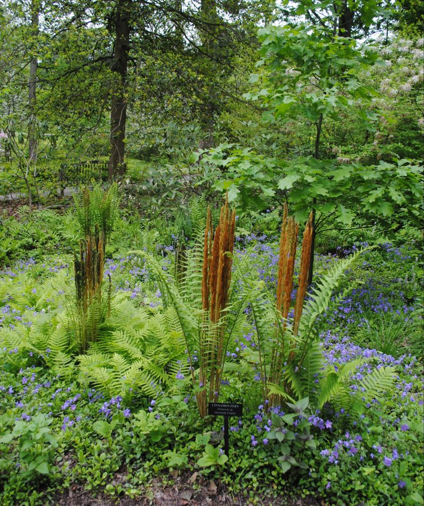 Green ferns surrounded by purple flowers with brown stalks growing out of them