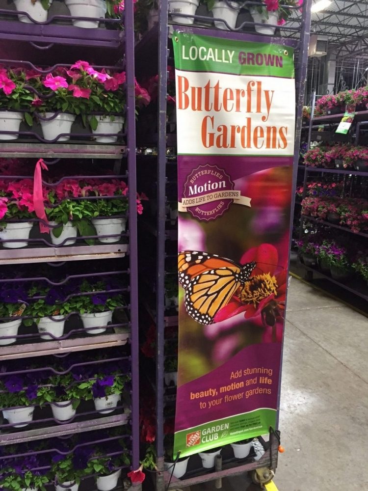 Butterfly garden display at Home Depot