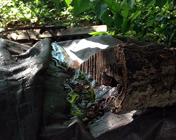 wood pile and tarp