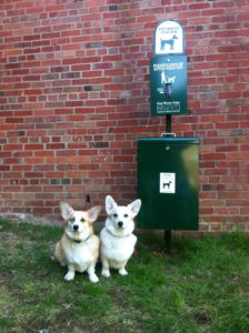 Dogs at pet waste station