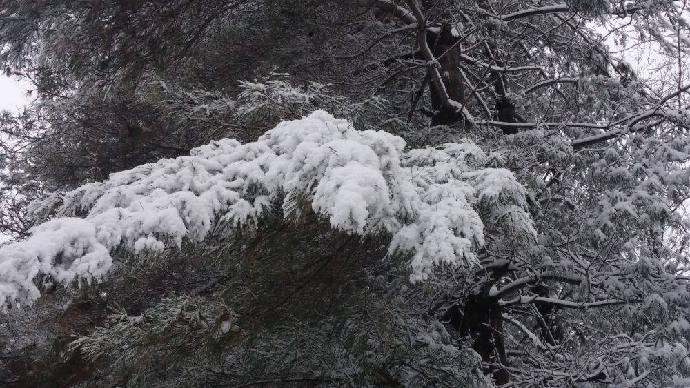 Branch covered in snow