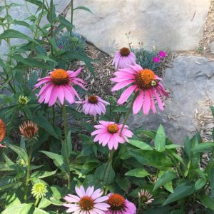 Update from the field our raingardens in the Northwood Foresthellip