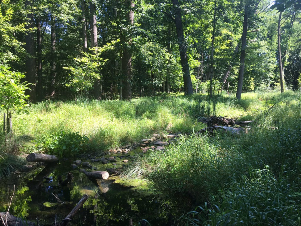 Breewood steps to slow stormwater