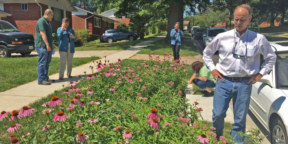 Beautifying Breewood: designing to create colorful gardens and improve water quality