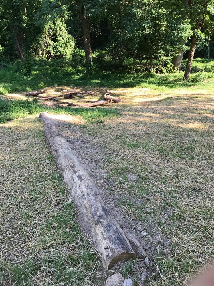 Ash tree log