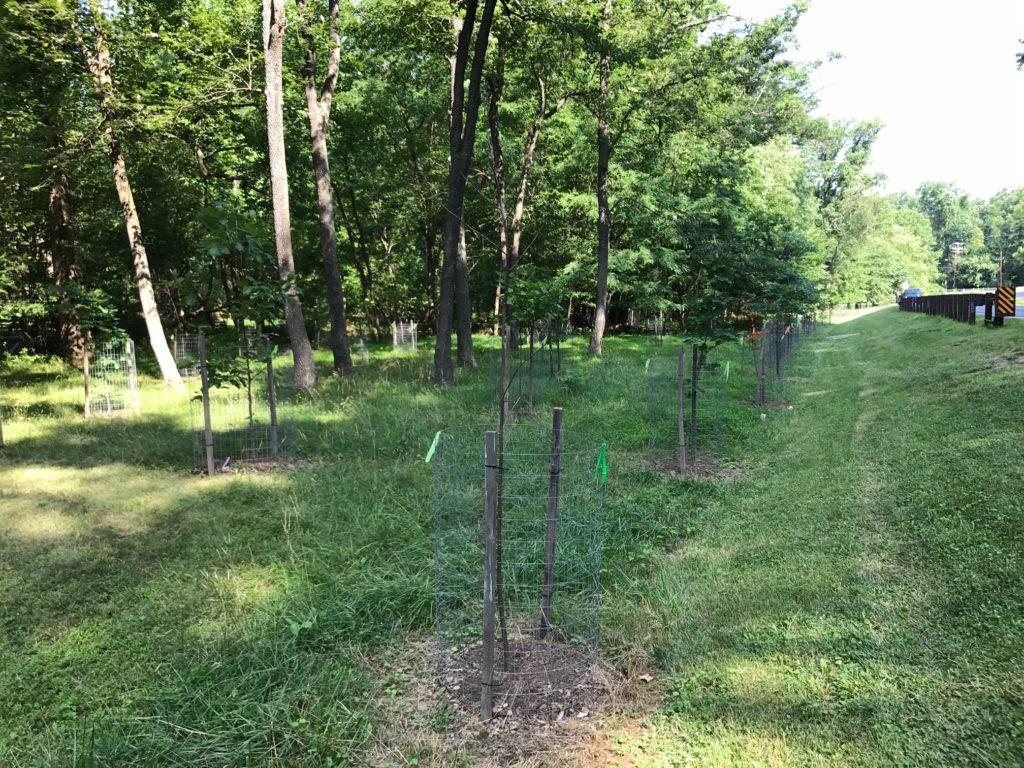 Tree plantings along Sligo Creek Parkway