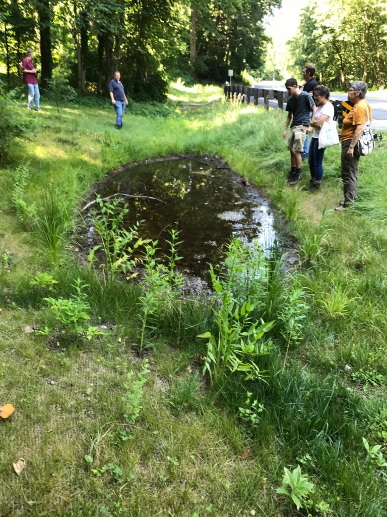 A small wetland pond also formed that was fed by a small spring.