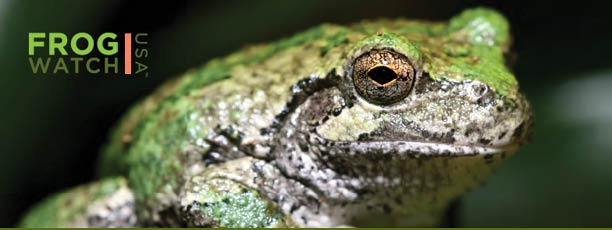 FrogWatch logo with a frog