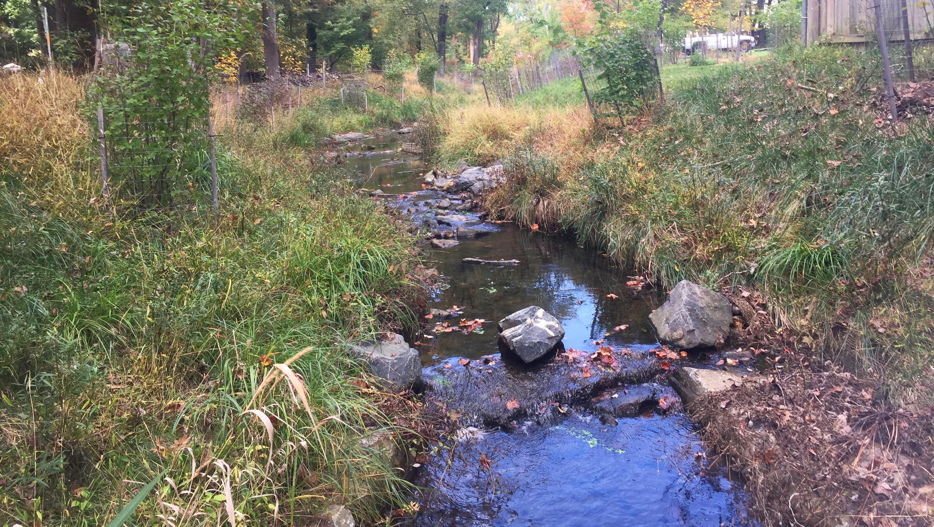 Hollywood Branch: A neighborhood stream restored
