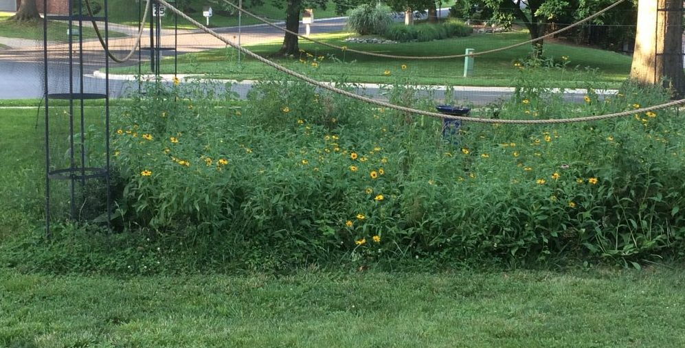Getting rid of your lawn? Follow our plan for a beautiful garden AND happy neighbors
