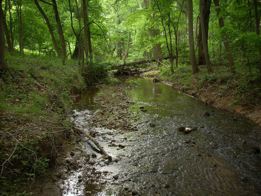 Blue Spotlight On: The Muddy Branch Watershed