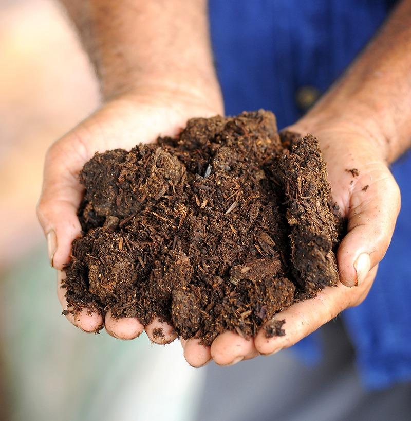 Hands holding soil. Sutsaiy Sangharn, 123RF