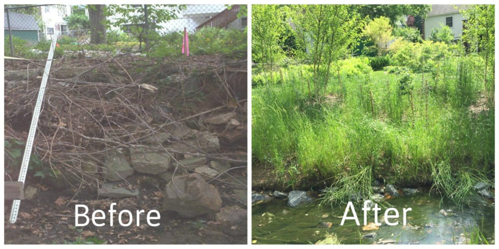 Before and after images of the gradation of an eroded stream bank that has been planted with vegetation as a buffer
